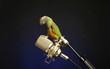 Bird standing on a microphone