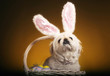 Dog with bunny ears sitting inside a basket of easter eggs
