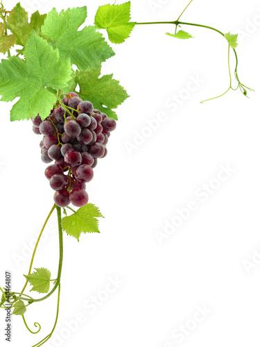 grappe de raisin et feuilles de vigne coin de page photo libre de droits sur la banque d. Black Bedroom Furniture Sets. Home Design Ideas