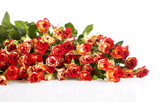 roses in a bunch isolated on a white background with space for t