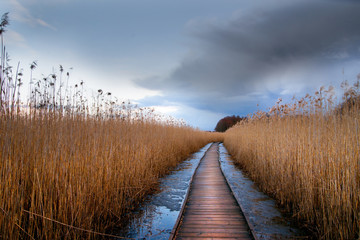 Wooden pathway in wetland