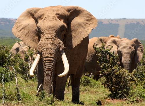 Fototapeten,afrika,afrikanisch,tier,baby