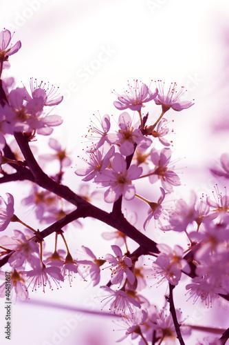 galazka-kwiatow-wiosna