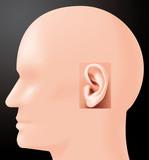 Sense of hearing poster