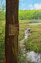 Protected Natural Bog