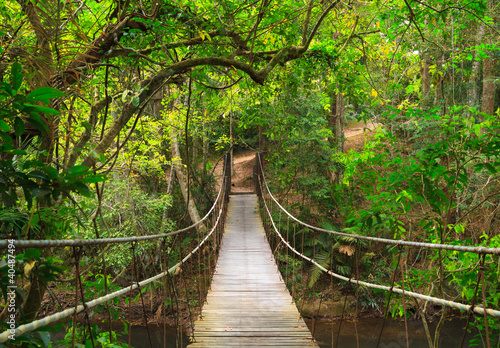 Leinwandbild Motiv Bridge to the jungle,Khao Yai national park,Thailand