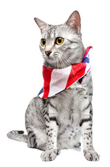 Patriotic Egyptian Mau Cat