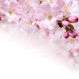 Fototapety Spring flowers design border background