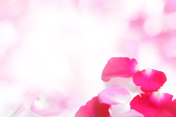 Rose pink petal abstract background