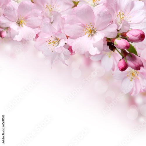 Wiosna kwiaty projektowania tła obramowania