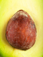 Core of avocado