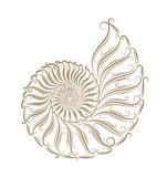 Fototapety Sketch of seashells