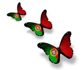 Three Portuguese flag butterflies, isolated on white