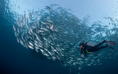 Diver with a school of Jacks