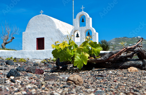 Vineyard field at Santorini island in Greece.