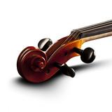 Violine white backround with shadow