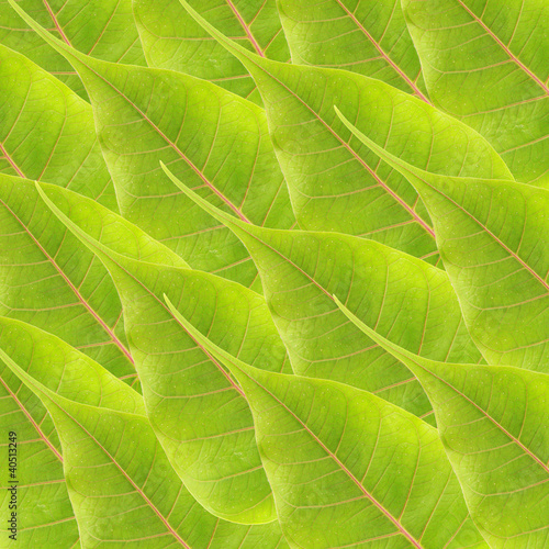 Panel Szklany green leaves background