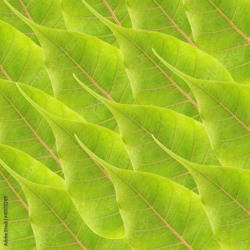 Fototapeta green leaves background