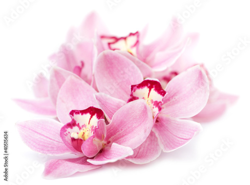 Aluminium Orchidee pink orchid flowers isolated