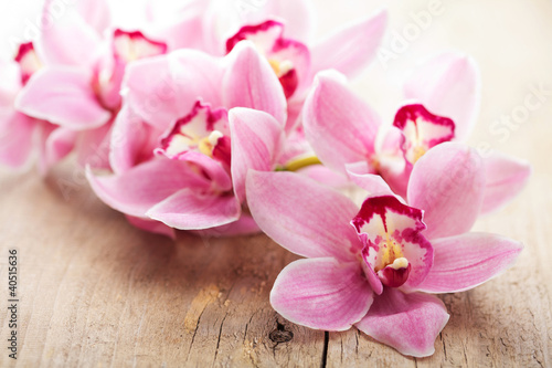 In de dag Orchidee pink orchid flowers