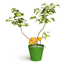 Beautiful Lemon Tree in 3D
