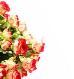 Fototapeta jasny - kiść - Kwiat