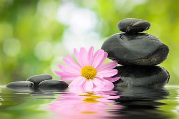 Zen Flower and Stone