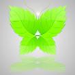 Batterfly from green leaves. Vector illustration.