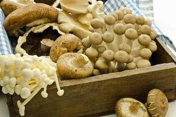 mushrooms in an old wooden box