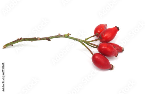 Fruits of wild rose on a white background