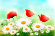 Nature background with summer flowers and zipper