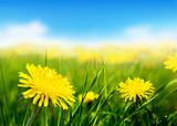 Fototapety Field of spring flowers