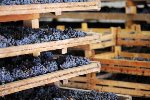 Appassimento uva per amarone