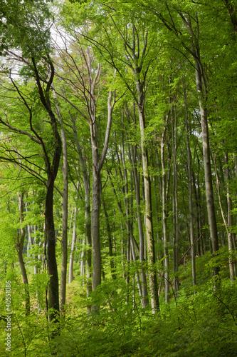 Fototapeten,laubwald,bäume,wald,lebensraum