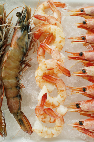 Various types of shrimps on crushed ice