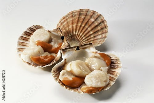 Fresh scallops in their shells