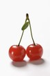 A pair of sour cherries with stalk and leaf