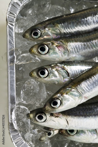 Several fresh anchovies in aluminium dish with ice