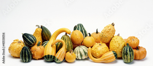 Assorted Gourds