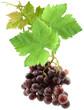 grappe de raisin avec feuilles de vigne
