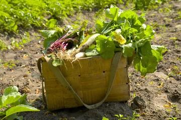 Basket of fresh vegetables in a field