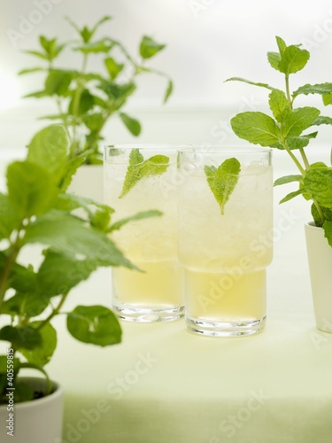 Minted Bourbon (Bourbon with mint, syrup and soda water)