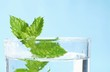 Fresh peppermint in a glass of water