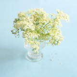 Elderflowers in a glass vase