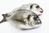 Two sea bream