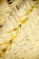 Several glasses of white wine for wine tasting