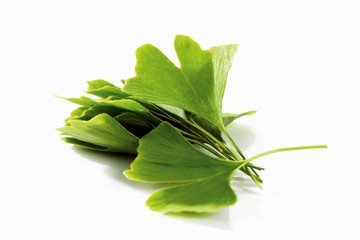 Fresh ginkgo leaves