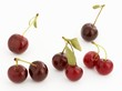Several cherries and pairs of cherries
