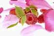 Raspberries with leaves and flower petals