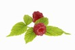 Two fresh raspberries with leaves